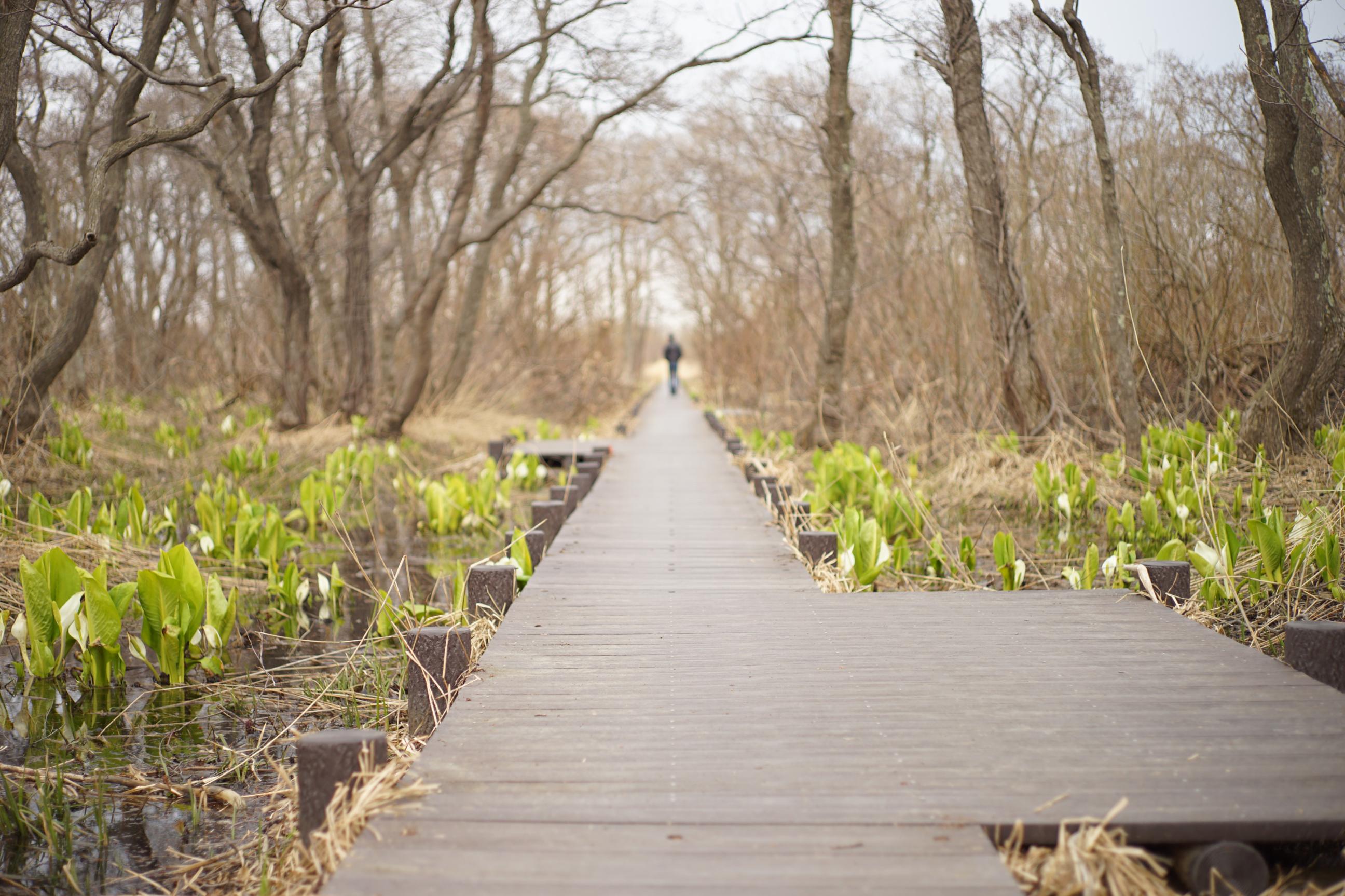 マクンベツ湿原の木道