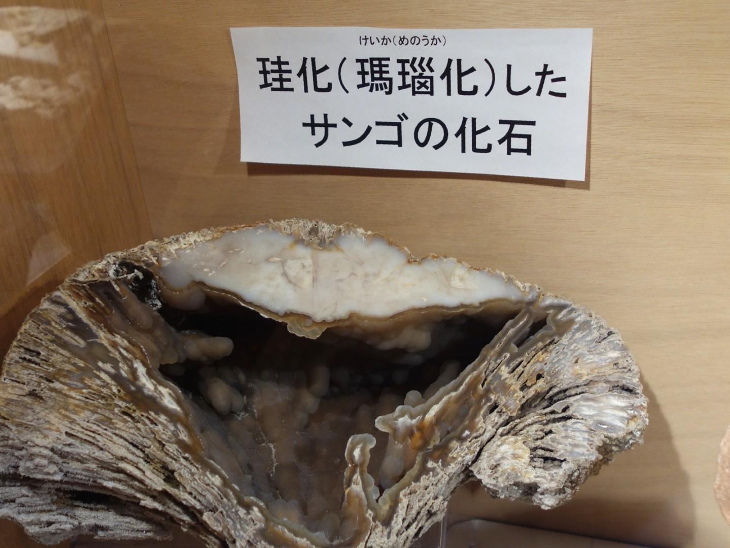 珪化したサンゴの化石