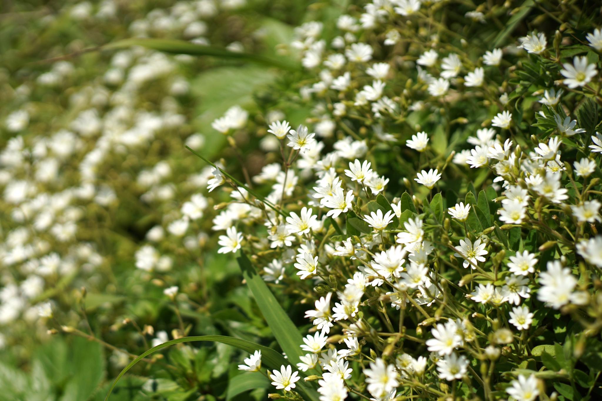 神威岬の花